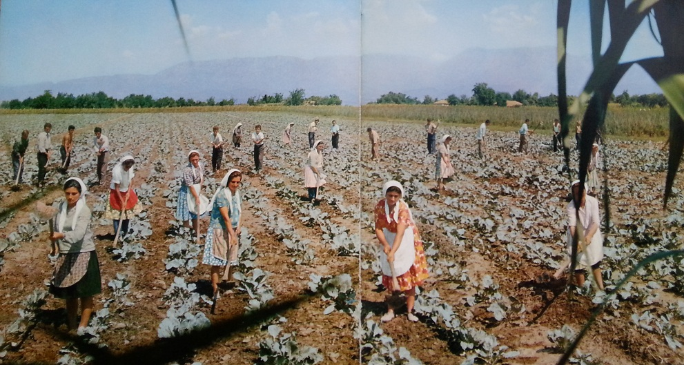 Nga bujqësia në plazh, si dukeshin femrat shqiptare në